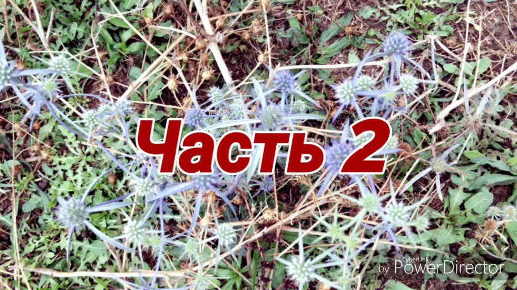 село Привольное – частное видео от 19 сентября 2018 – часть 2